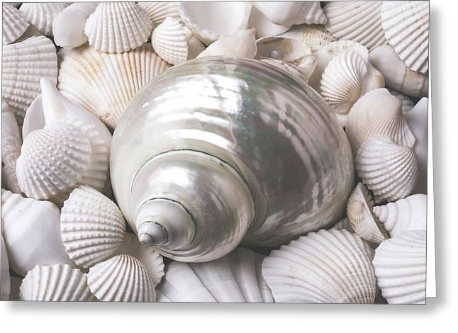 Wonderful White Seashells Greeting Card by Garry Gay