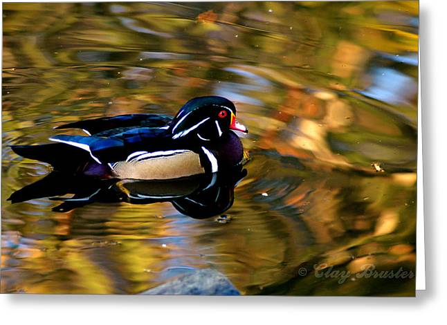 Bruster Greeting Cards - Wood Duck Greeting Card by Clayton Bruster