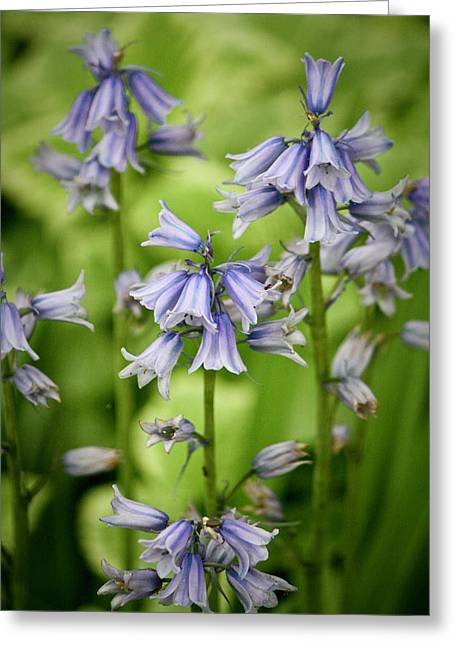 Endymion Greeting Cards - Wood Hyacinths Greeting Card by Teresa Mucha