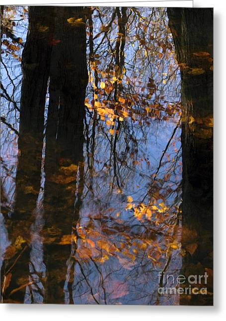 Glassy Lake Surface Greeting Cards - Wood Spirit Greeting Card by Joanne Baldaia - Printscapes