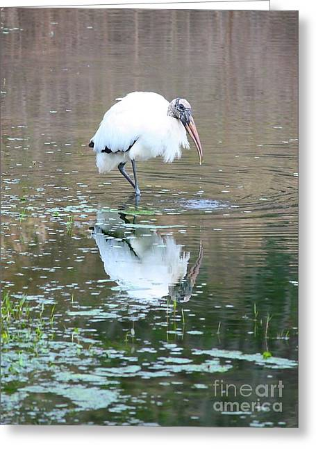 Florida Pond Greeting Cards - Wood Stork Beauty Greeting Card by Carol Groenen