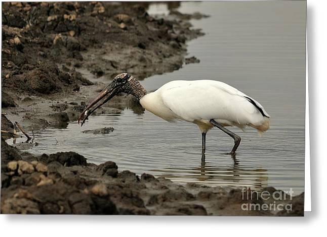 Al Powell Photography Usa Greeting Cards - Wood Stork with Fish Greeting Card by Al Powell Photography USA