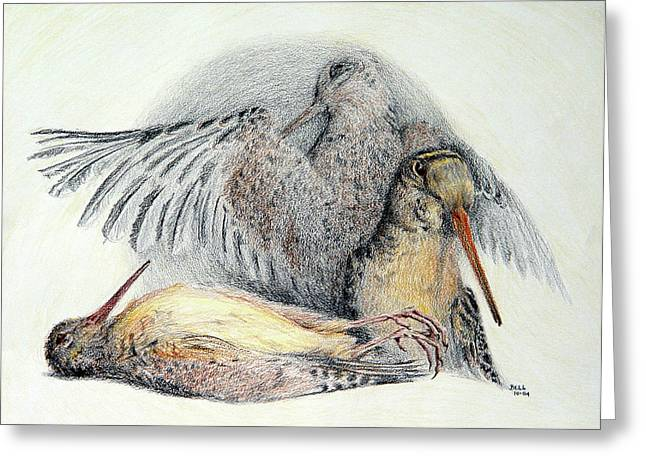 Hunting Bird Drawings Greeting Cards - Woodcock Greeting Card by Betsy Gray