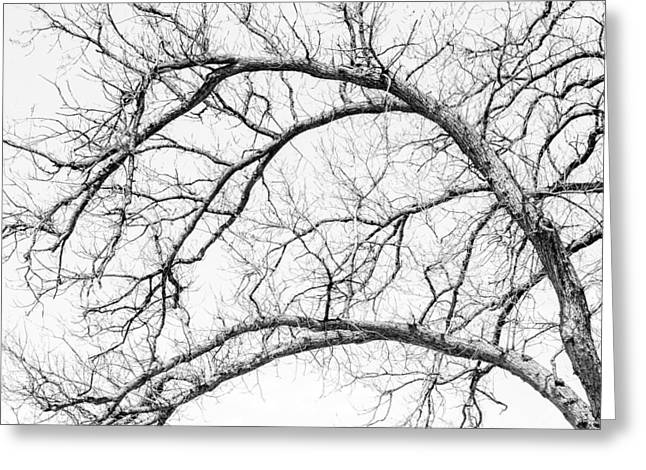 Mood Greeting Cards - Wooden Arteries Greeting Card by Az Jackson