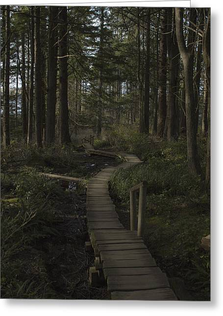 Cape Flattery Greeting Cards - Wooden Path Greeting Card by Darcy Hanson