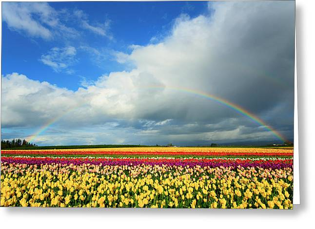 Wooden Shoe Rainbow Greeting Card by Patrick Campbell