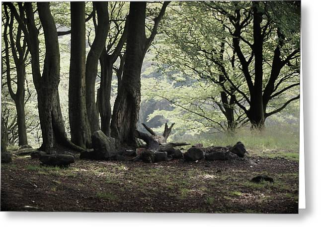 The Woodland Clearing  Greeting Card by Philip Openshaw