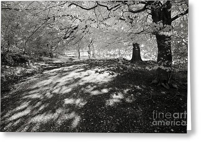 """spreading Tree"" Greeting Cards - Woodland Dappled Shade Greeting Card by Ron Evans"