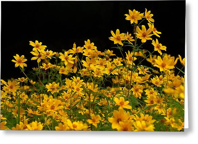 Woodland Scenes Greeting Cards - Woodland Flowers Greeting Card by Jaime Thomas
