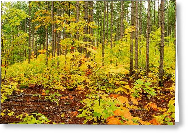 Woodland Panorama Greeting Card by Michael Peychich