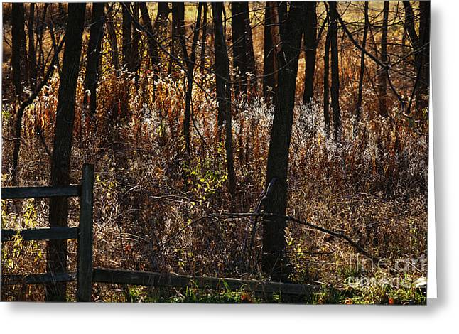 Fall Grass Greeting Cards - Woods - 2 Greeting Card by Linda Knorr Shafer