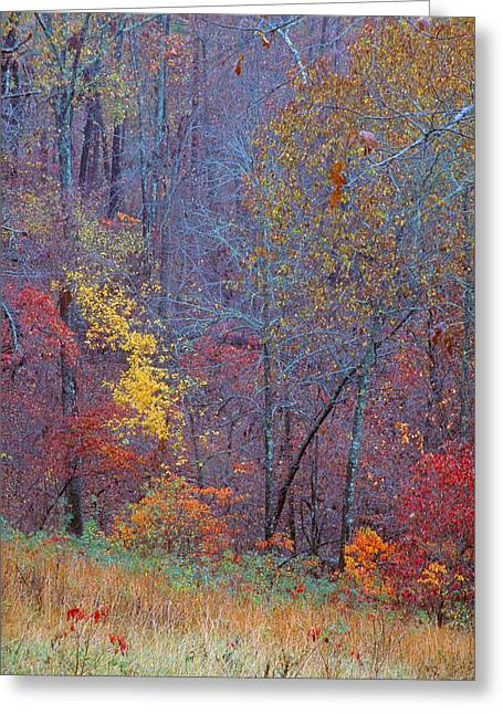 Fall Grass Greeting Cards - Woods in Fall Greeting Card by Jim Murphy