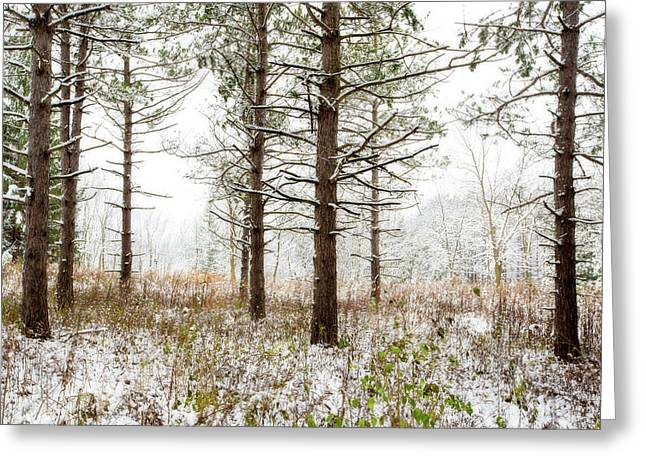 Woods In Winter 2 At Retzer Nature Center  Greeting Card by Jennifer Rondinelli Reilly - Fine Art Photography