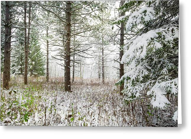 Woods In Winter At Retzer Nature Center  Greeting Card by Jennifer Rondinelli Reilly - Fine Art Photography