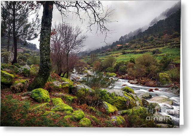 Rapids Greeting Cards - Woods Landscape Greeting Card by Carlos Caetano