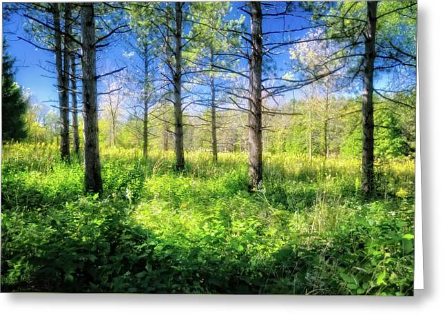 Woods Of Retzer Nature Center Greeting Card by Jennifer Rondinelli Reilly - Fine Art Photography
