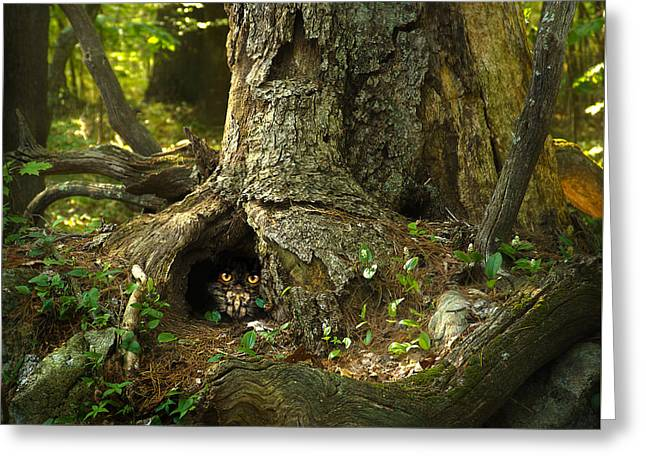 Woody 120 In The Wild Greeting Card by Rick Mosher