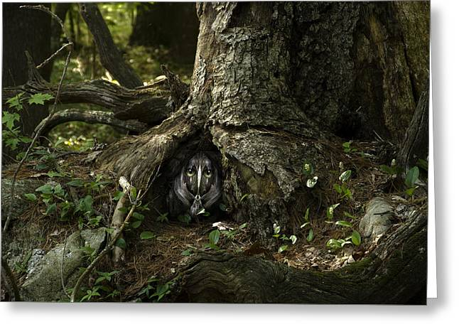 Woody 142 In The Wild Greeting Card by Rick Mosher