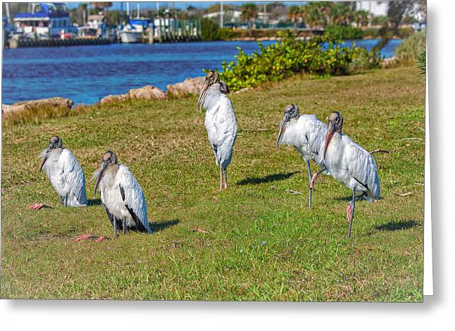 Harmonize Greeting Cards - Woody and the Four Storks Greeting Card by John Bailey