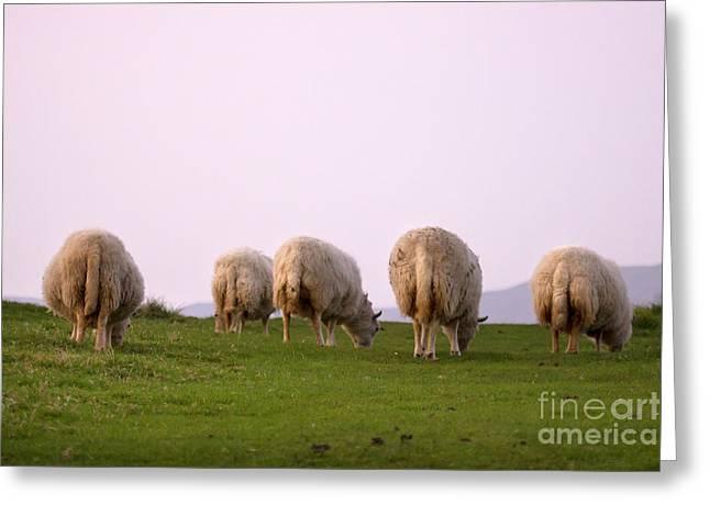wooly bottoms Greeting Card by Angel  Tarantella