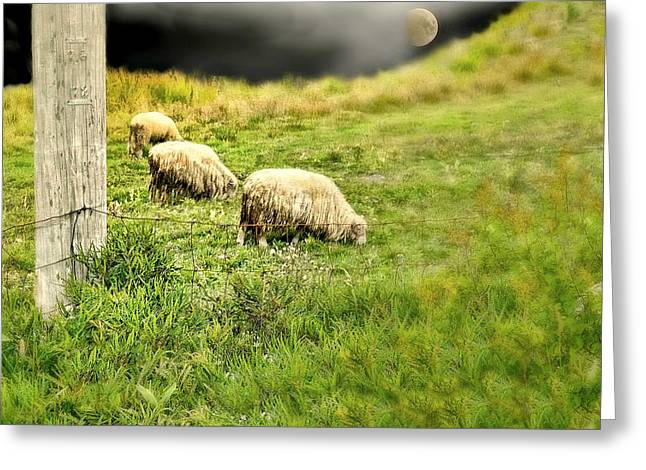 Wooly Greeting Card by Diana Angstadt