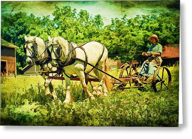 The Horse Greeting Cards - Work Horses And Plow Reenactment Greeting Card by Geraldine Scull