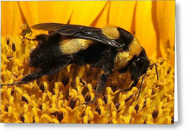 Macro Tapestries - Textiles Greeting Cards - Worker Bee Greeting Card by Paula Anderson