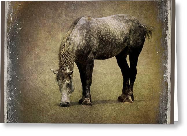 Working Horse Greeting Card by Sari Sauls