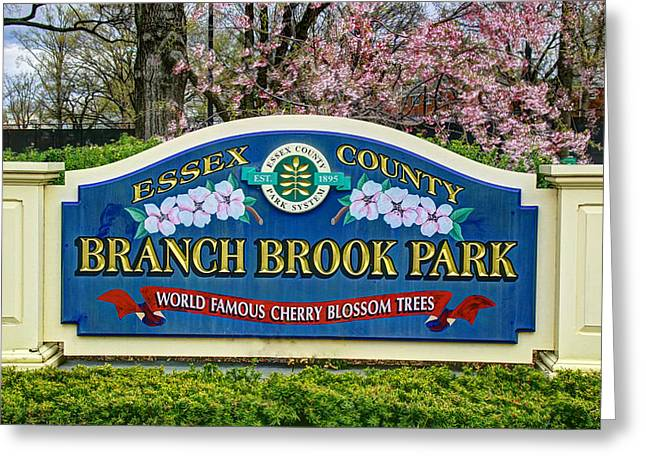 Printmaking Greeting Cards - World Famous Cherry Blossom Trees  of Branch Brook Park Greeting Card by Allen Beatty
