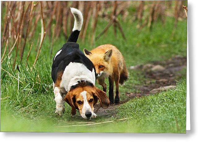 Beagle Greeting Cards - World\\\'s Worst Hunting Dog Greeting Card by Mircea Costina