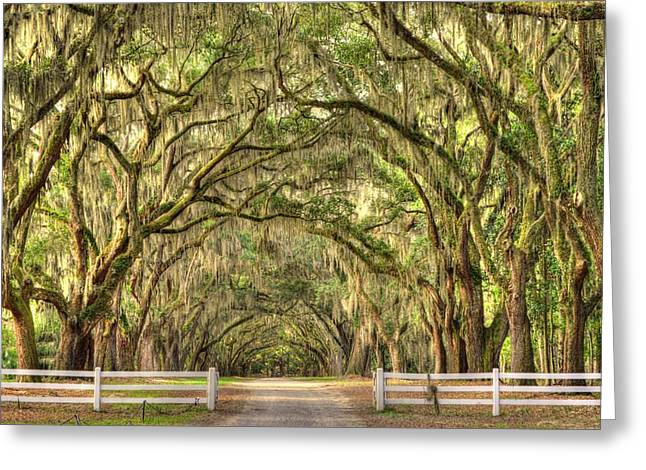 Historic Site Greeting Cards - Wormsloe Oaks Greeting Card by Linda Covino