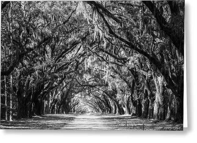 Historic Site Greeting Cards - Wormsloe Plantation Oaks BW Greeting Card by Joan Carroll