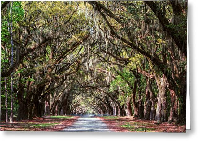 Historic Site Greeting Cards - Wormsloe Plantation Oaks Greeting Card by Joan Carroll