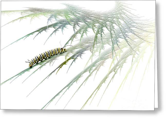 Caterpillar Greeting Cards - Wormwood Greeting Card by Jan Piller