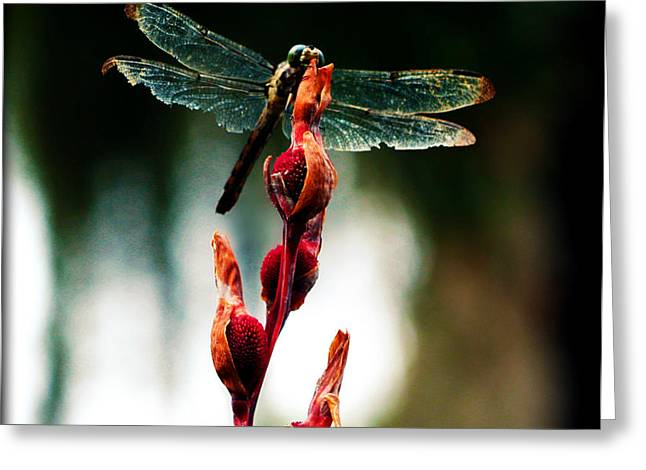Wornout Dragonfly Greeting Card by Susie Weaver
