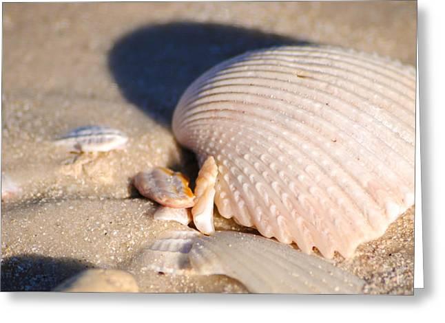 Print Photographs Greeting Cards - Seashell #61 Greeting Card by Rich Wake