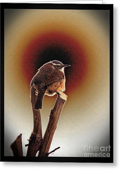 Wren At Sundown Greeting Card by Sue Melvin