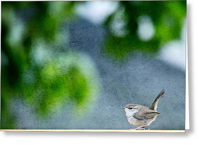 Wrens Greeting Cards - Wren Greeting Card by Rebecca Cozart