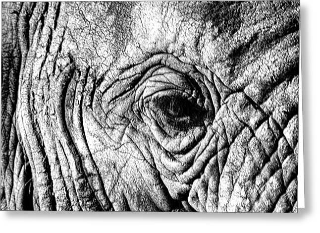 Elephants Eye Greeting Cards - Wrinkled Eye Greeting Card by Douglas Barnard