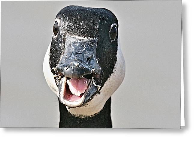 Geese Greeting Cards - Wwhhaaat Greeting Card by Robert Pearson