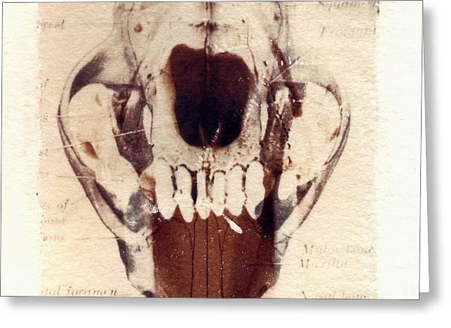 X Ray Terrestrial Greeting Card by Jane Linders