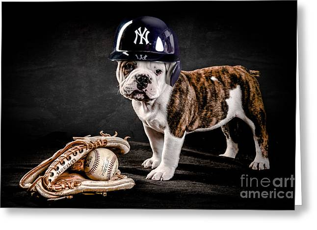 British Bulldog Greeting Cards - Yankee Bulldog Greeting Card by Jt PhotoDesign