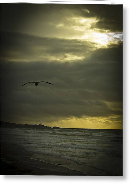 Sun Break Greeting Cards - Yaquina Head Lighthouse Greeting Card by Dale Stillman