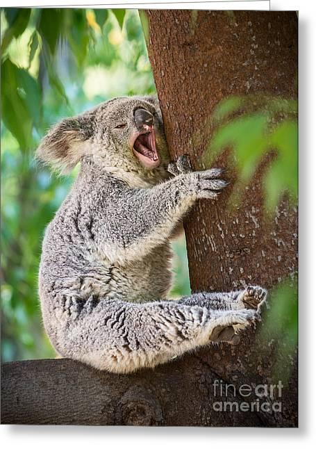 Yawn And Stretch Greeting Card by Jamie Pham
