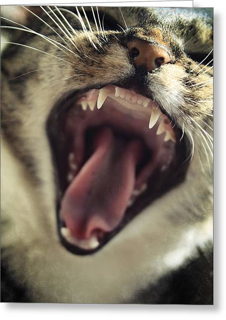 Yawning Greeting Card by Cambion Art