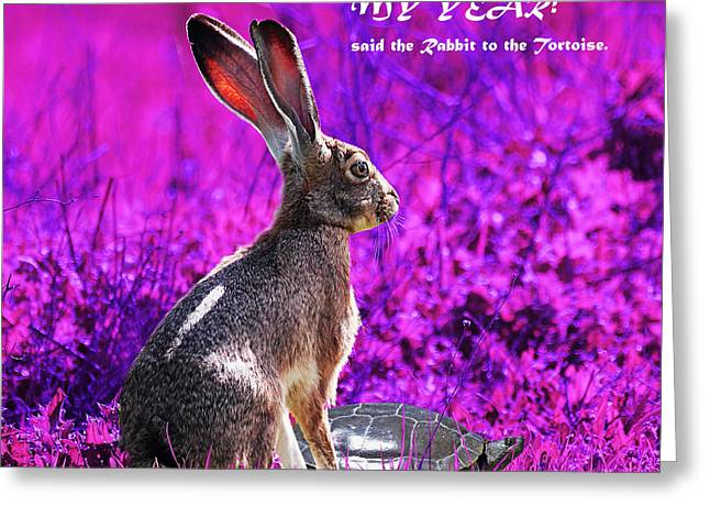 Nursery Rhyme Digital Greeting Cards - Year of the Rabbit 2011 . Square Magenta Greeting Card by Wingsdomain Art and Photography