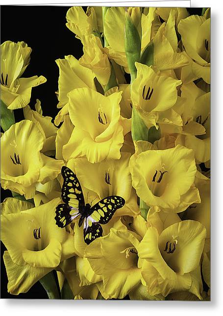 Gladiolus Greeting Cards - Yellow And Black Butterfly On Yellow Glads Greeting Card by Garry Gay