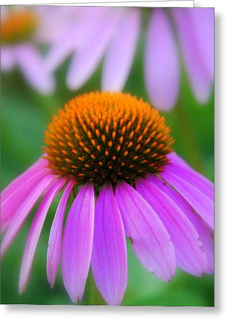 Photography Greeting Cards - Yellow and Pink Greeting Card by Susanne Van Hulst