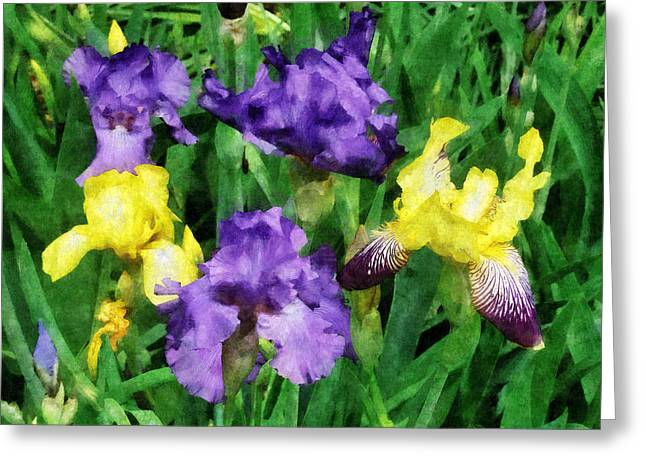 Irises Greeting Cards - Yellow and Purple Irises Greeting Card by Susan Savad