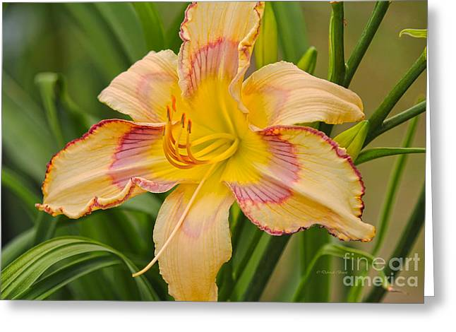 Yellow And Red Lily Greeting Card by Deborah Benoit